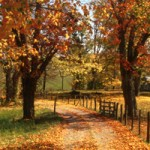 Thumbnail image for Visit West Virginia for Peak Foliage Season