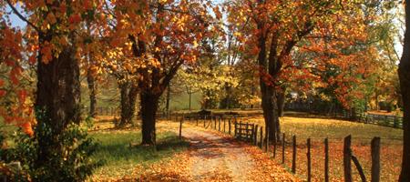 Autumn Foliage Trip to West Virginia