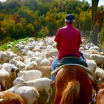Thumbnail image for Why Horseback Riding is the Best Fall Foliage Excursion